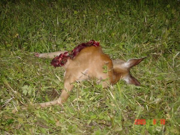 Pauvre bambi !!! DSC00041